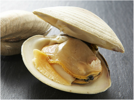 Digestive of Clam and Porpoises